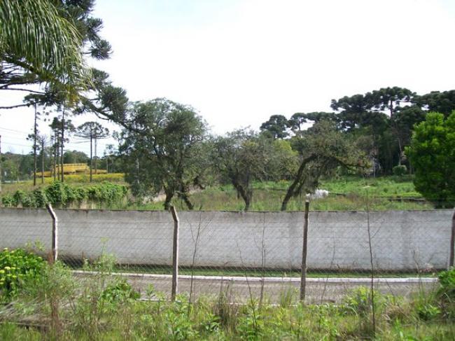 Área Frente BR 277 com 22.000 m2 , antes do Pedágio.